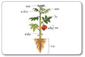 ส่วนต่างๆของพืชสมุนไพร